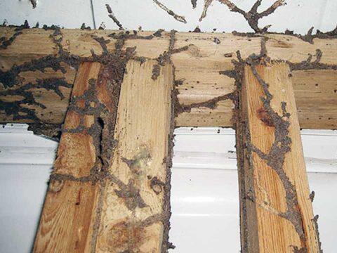 termite_spread
