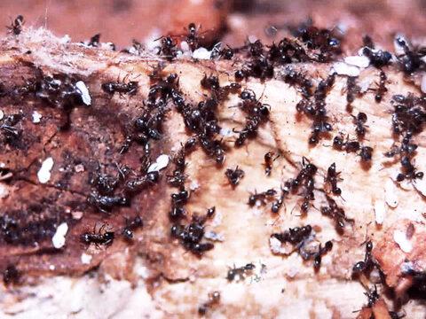 ant-kill-termites