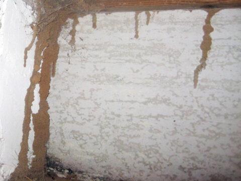 Termites-in-winter